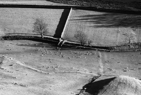 A Bridge for Sheep by Acancarter