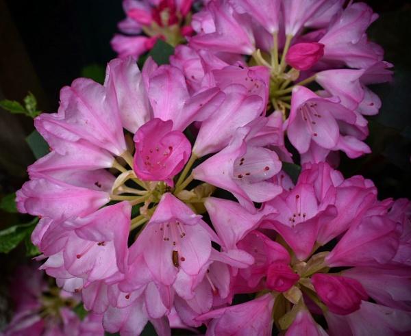 Pretty in pink by Kaxxie