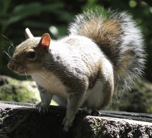 Squirrel in the Sun by Samantha011208