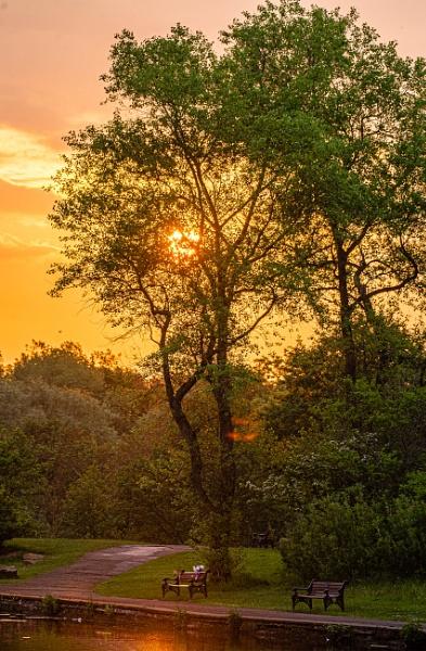 Park Summer Sunrise by chensuriashi