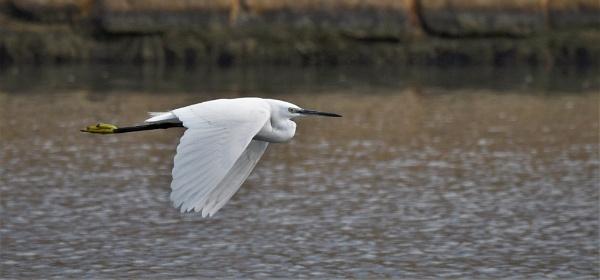Graceful Flight by KingArthur