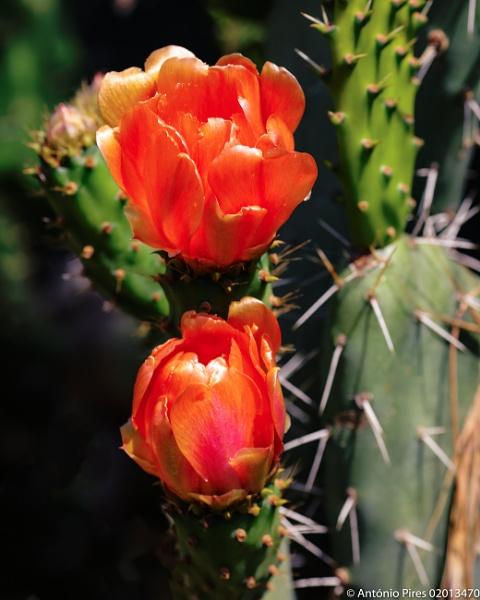 Cactus flower by Neopolis