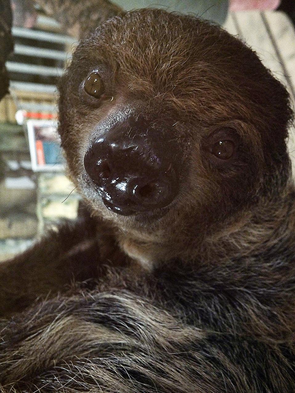 Talita the Sloth