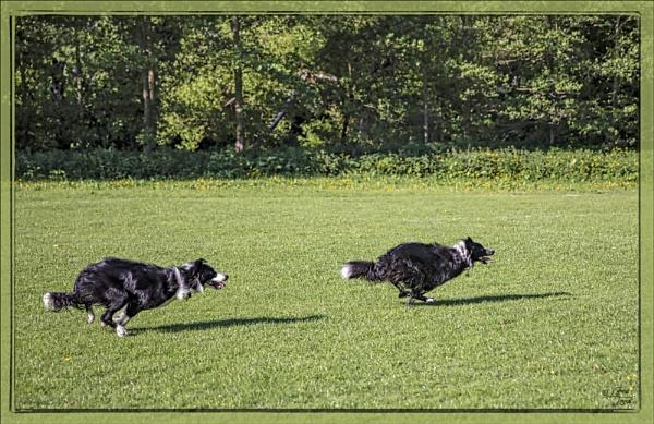 Rescue Dogs by LynneJoyce
