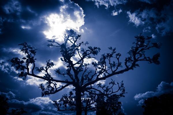 Tinted Tree Silhouette by JackAllTog