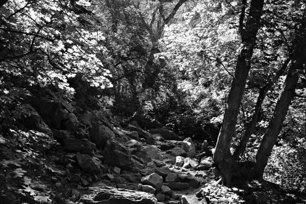 In the woods by mlseawell