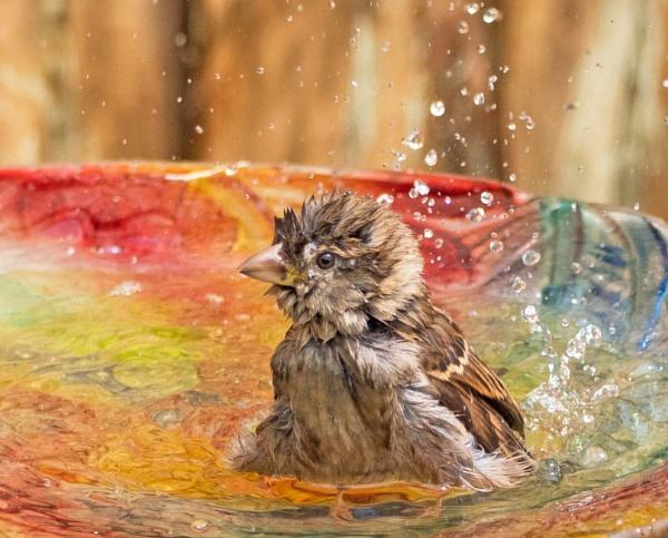 Bubble Bath by sweetpea62