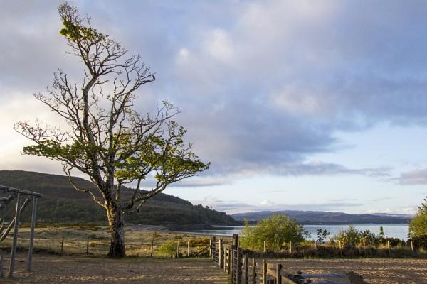 Dawn at Tralee Bay by Irishkate