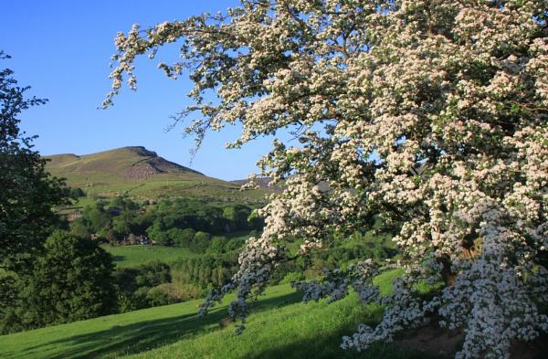 Hawthorn blossom by michaelfox