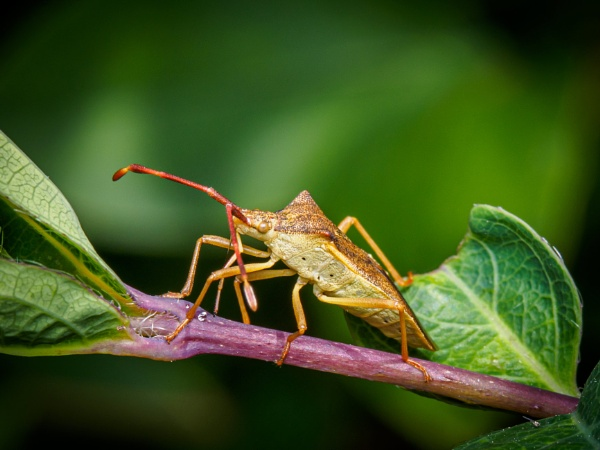 Dock bug by chavender