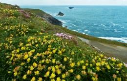 Coastal Flowers -7- Trevose Head