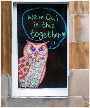 Owl Together