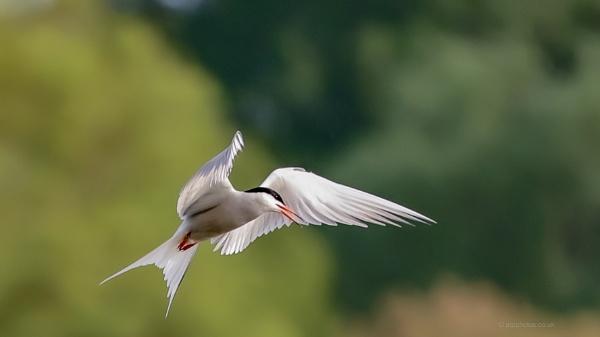 in flight by alanb