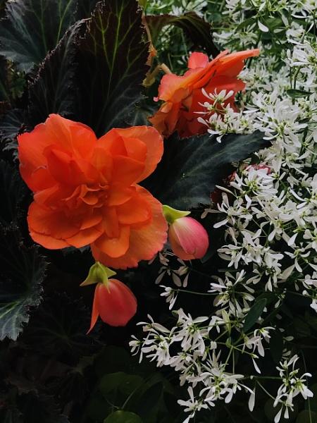 Orange blossom by manicam