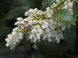 Flowers of Spring #21
