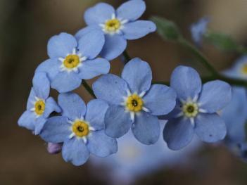 Flowers of Spring #23