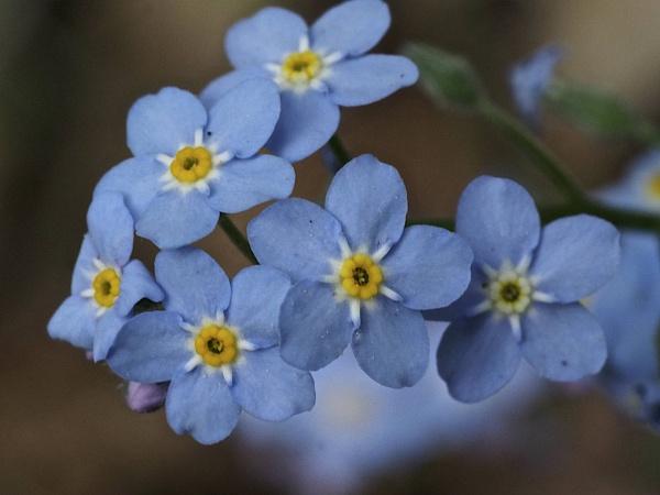 Flowers of Spring #23 by handlerstudio