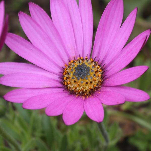 Pretty in pink by loobylyn