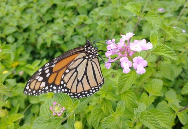 Butterfly by kl0verleaf