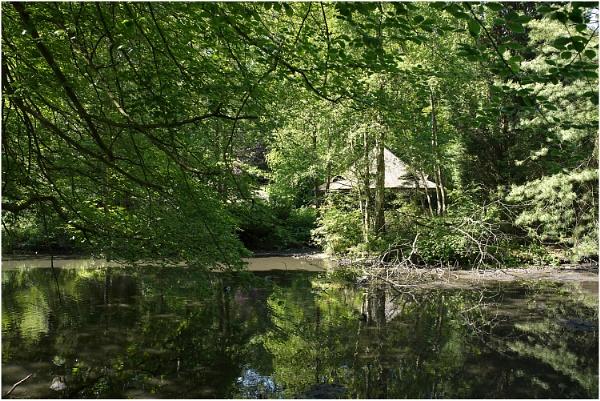 Woodland Pond by johnriley1uk