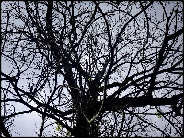 bare branches by FabioKeiner