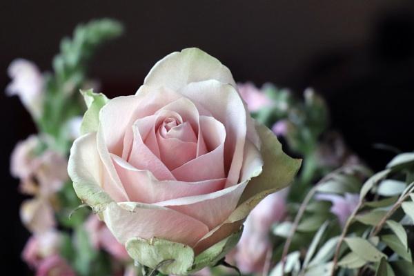 shade of pink... by estonian