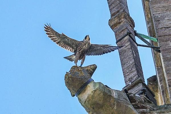 I can fly. by Lencollard