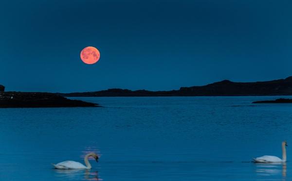 Blood Moon by Jackieann