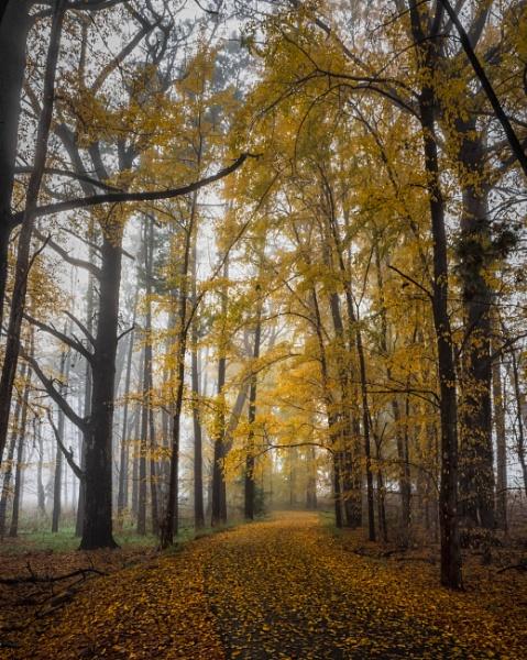 Autumn\'s End, Canberra by BobinAus
