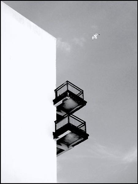 One Gull, Two Balconies. by ZenTony