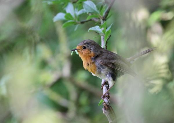 The early bird by Philipwatson