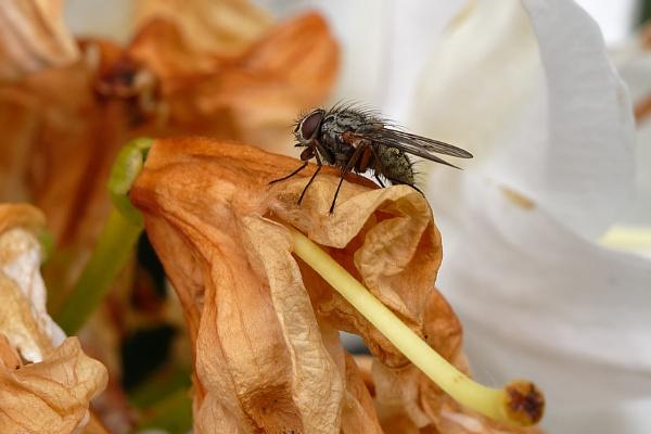 Fly on Azalia. by simmo73
