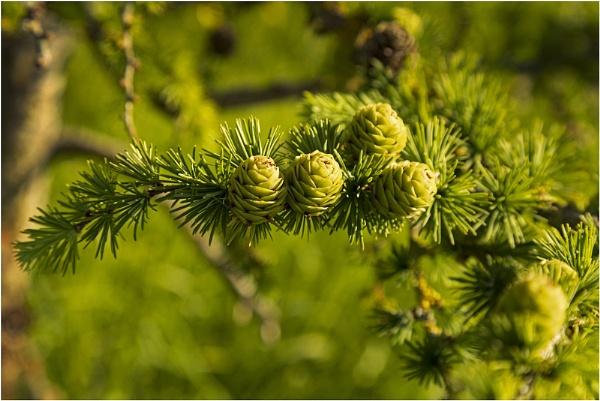 Spring Stroll - Olbury Naite - Oldbury on Severn by VincentChristopher