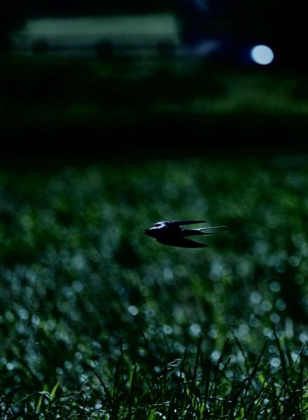 Night Fury by RossiT123