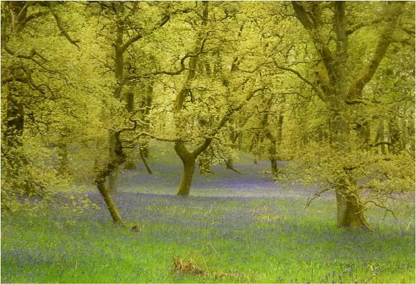 Spring Morning by MalcolmM