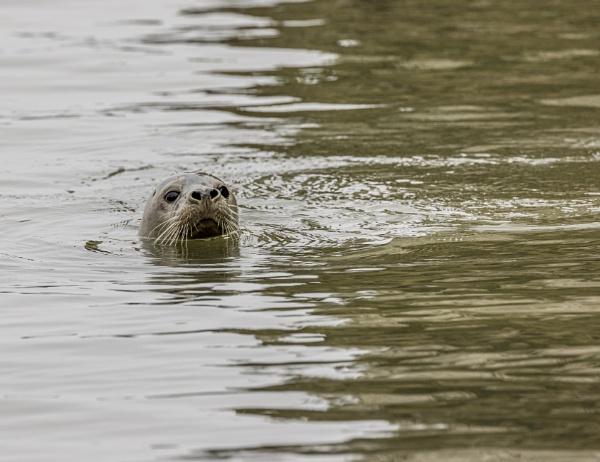 A Curious Seal by AnnetteK