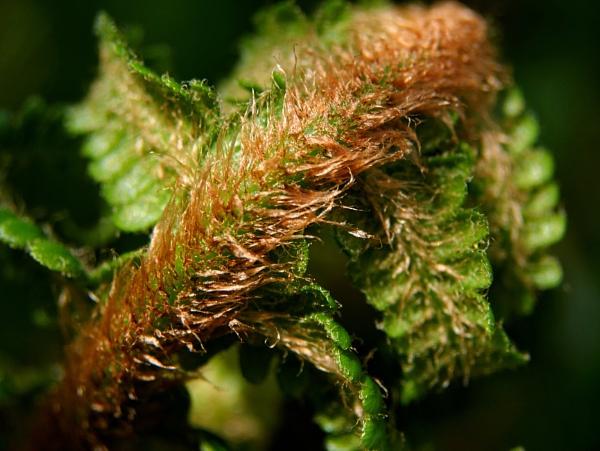 litle ferns by elousteve