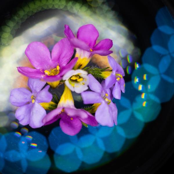 Bokeh Bouquet by Acancarter