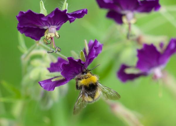 Pollinators by martin174