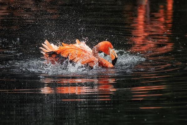 Flamingo Funtime by Buffalo_Tom