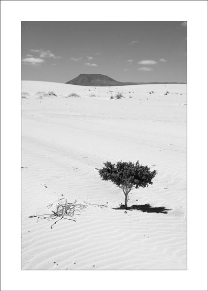 A Shady Tree.... by Steve-T