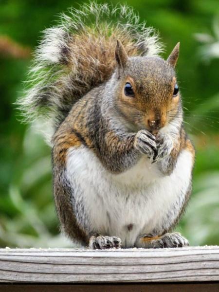 Squirrel by markymook