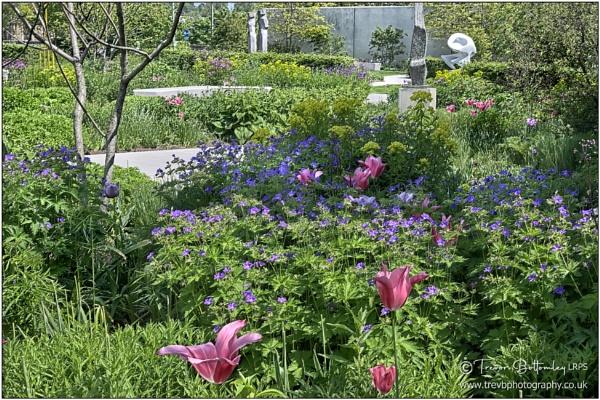 Hepworth Gardens revisited 5 by TrevBatWCC