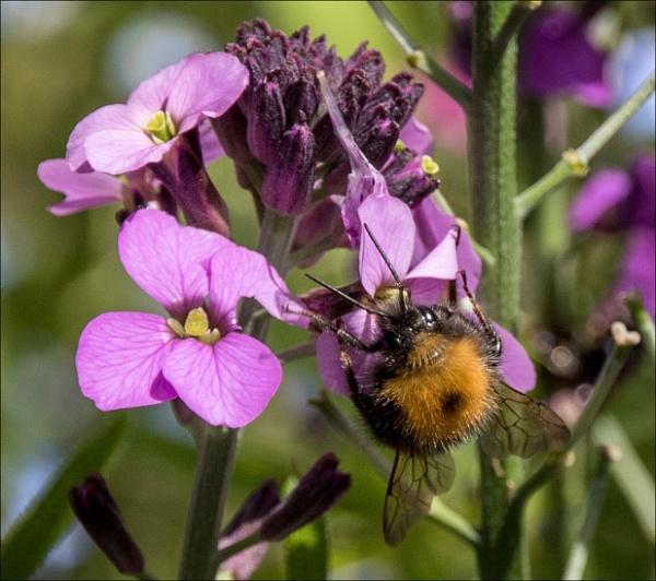 Bee feast by rambler