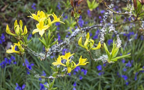 Blue & Yellow by Irishkate