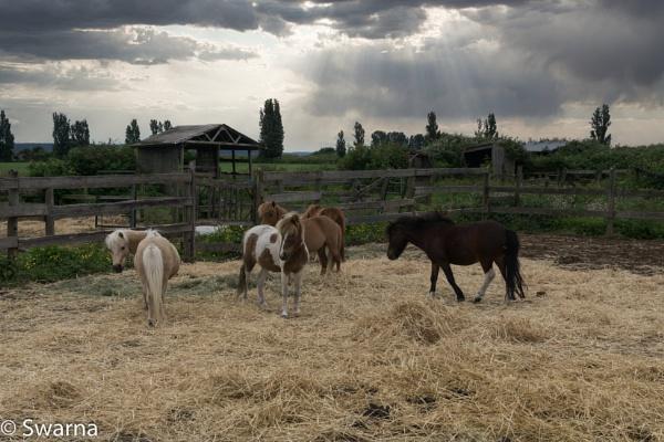 Horses in Farmhouse... by Swarnadip