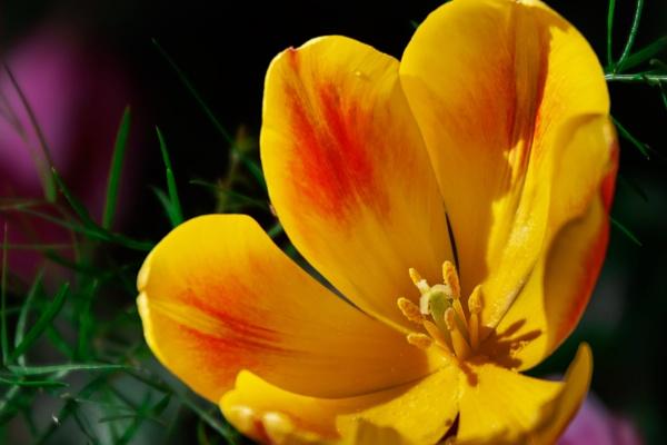 Sunshine Blossom by manicam