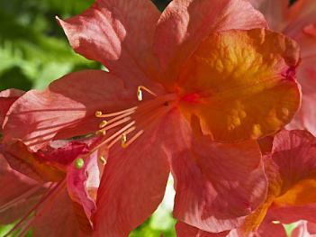 Flowers of Spring #29