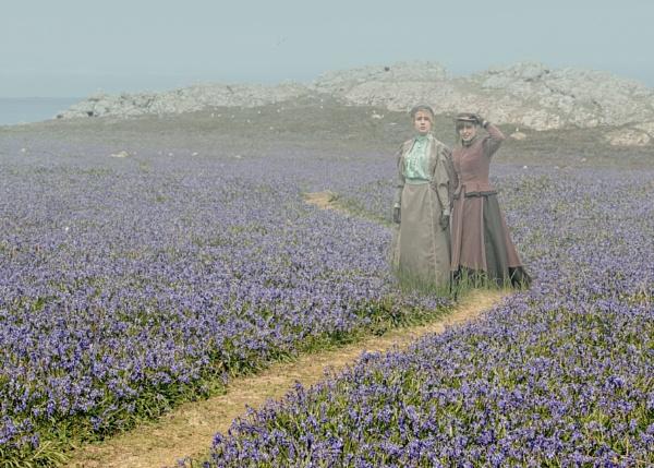 Bluebell fields by HelenaJ