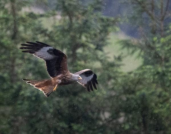 Kite in Flight by TheShaker